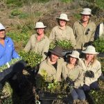 Bush Regeneration,Volunteers
