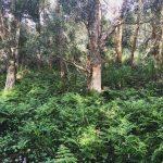Bush Regeneration at Woomera Reserve, Little Bay